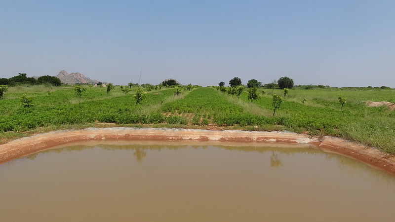 A low-cost farm pond in Mr Gopal's farm in Mallapuram, Andhra Pradesh