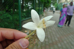 Bangalore - Frangrant Flower