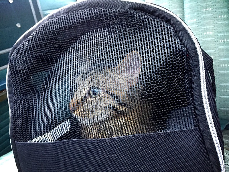 theodore doesn't appreciate a ride to the vet.  soon, he'll appreciate it even less.