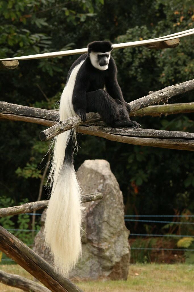 Zoo de la Boissère du Doré 29074042743_aec18b4ba0_b