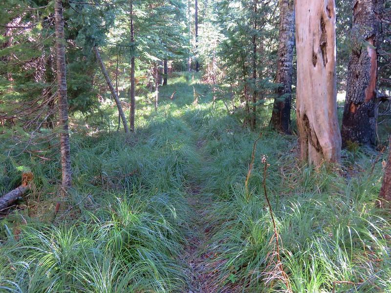 Benson Trail