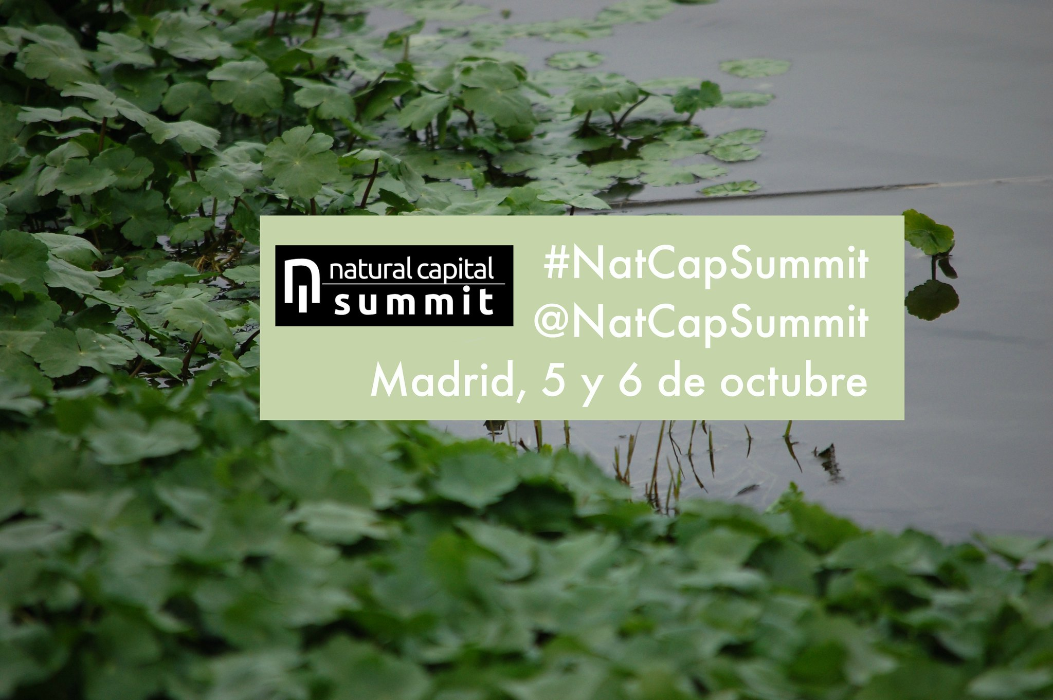 Anuncio Capital Natural Summit: estanque con plantas