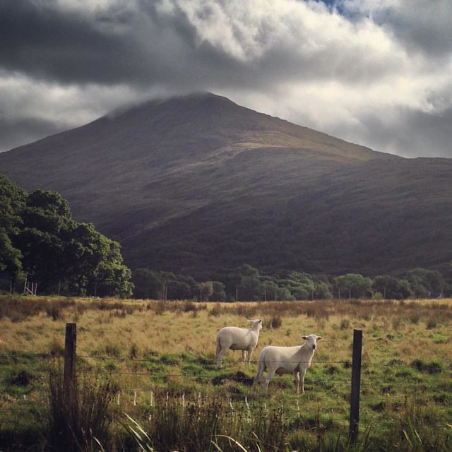 Rothven, Scottish Highlands  #Rothven #scottish highlands #scotland #scottishscenery