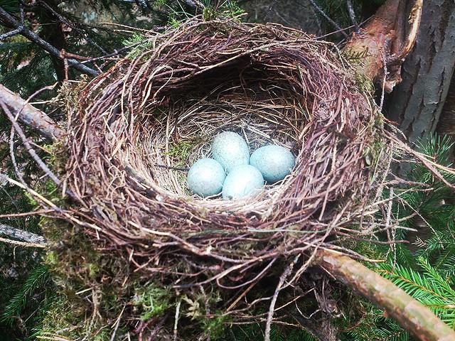 Egg í hreiðri
