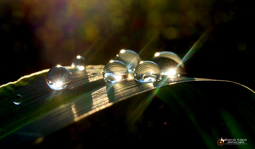 Water Drops 12 | by notisamanalaya