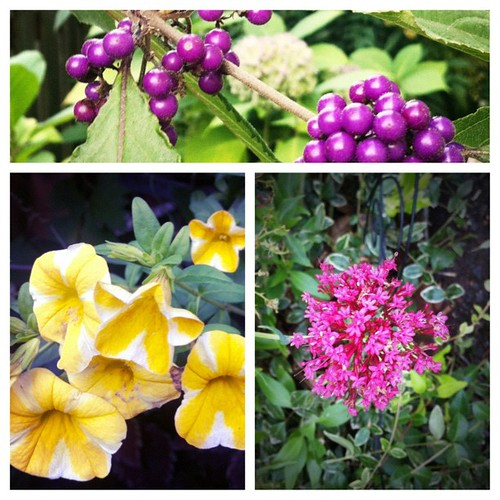 More garden color today. | by Lelonopo