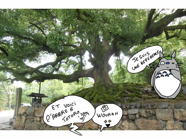 Japon arbre totoro