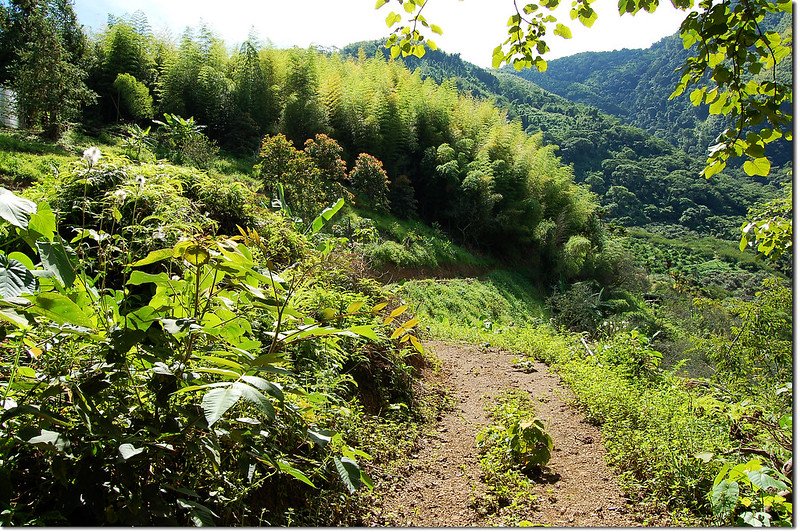 十甲山東邊山景