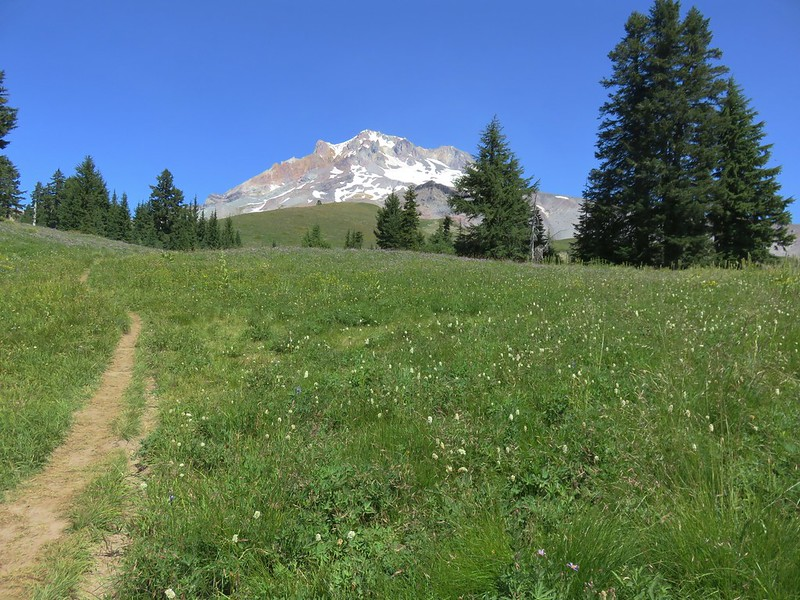 Mt. Hood from the Paradise Park Trail