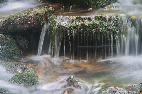 Parque Natural de #Gorbeia #DePaseoConLarri #Flickr - -916