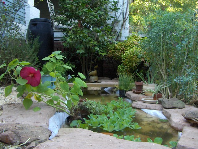 2010 new goldfish pond