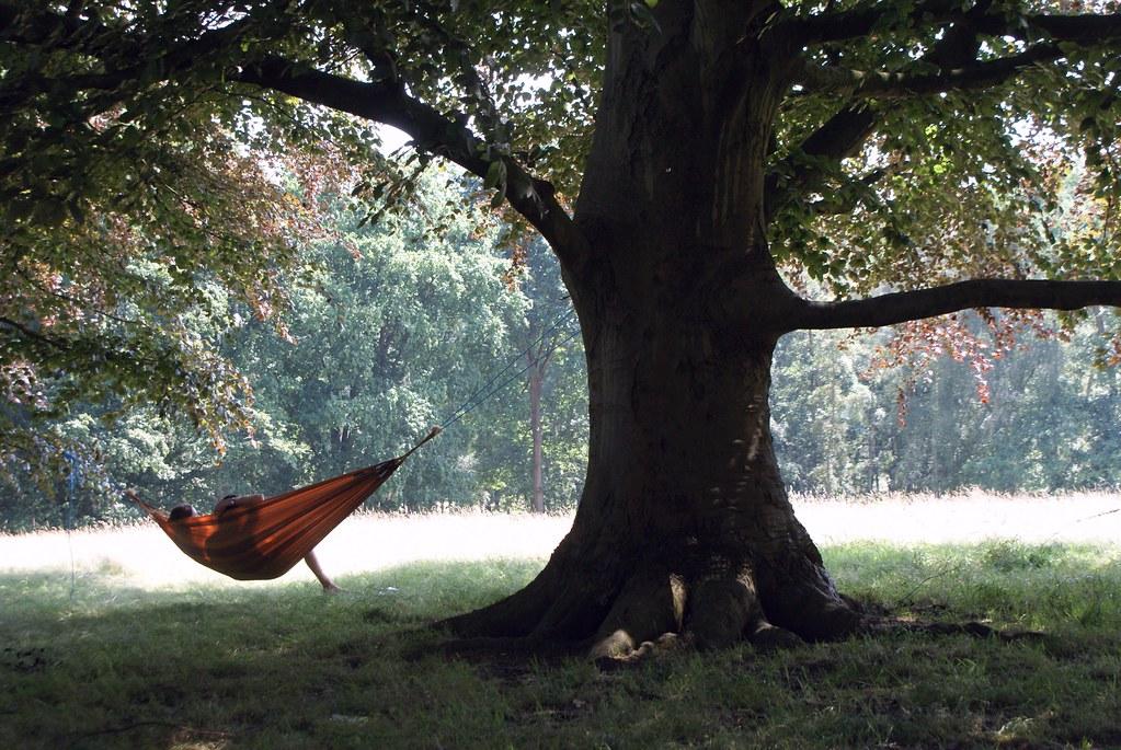 Hamac pour deux sous un grand chêne dans Hampstead Heath à Londres.