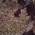 Monkeys 1