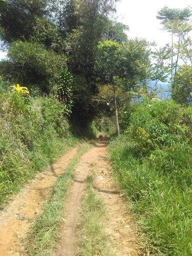 Bukit Alesano
