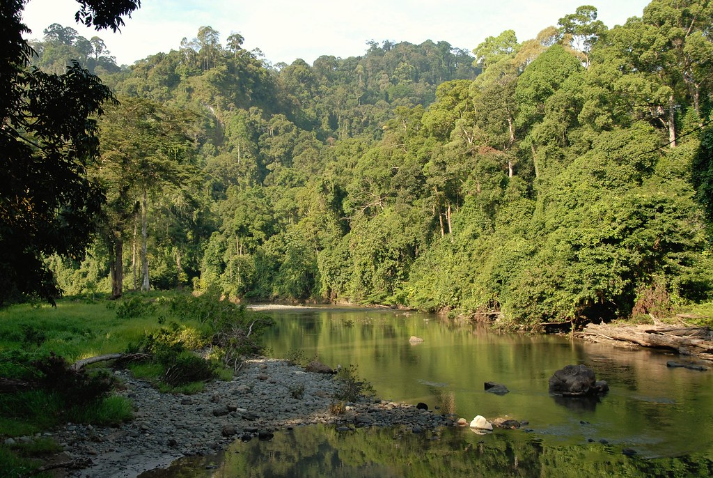 Tropical Landscapes, Exotic Plants And Unique Animal Species In Borneo