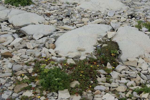 A Little Ecosystem