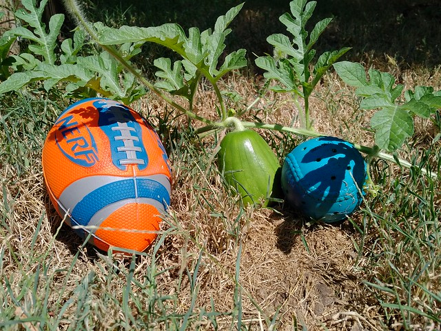 Watermelon babes