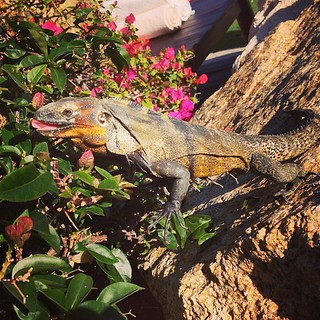 Poolside buddy. Didn't offer me 15% off my insurance. #lamelizard | by gavoweb