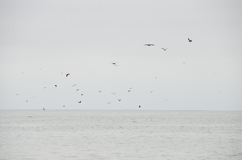Birds Enjoying the Whales