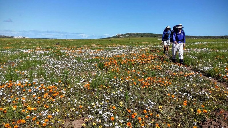 Marion and Ralph crossing fields of flowers
