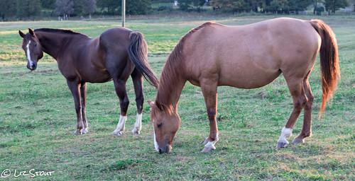 horses09222016 (9 of 11)