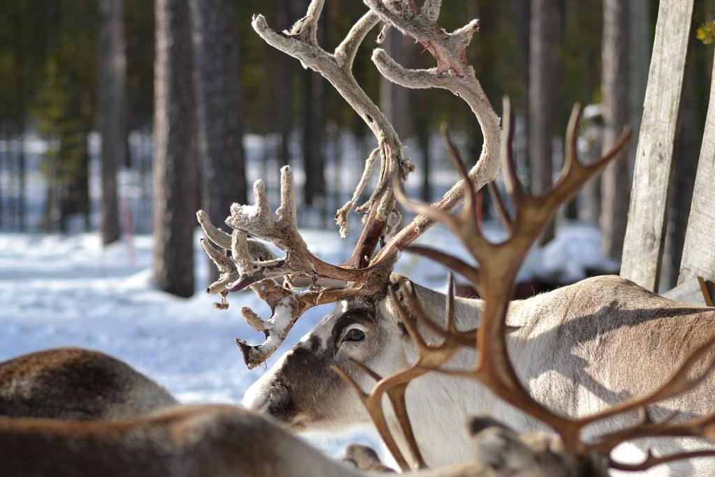 Nice Antlers