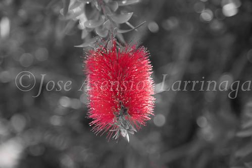 flor #DePaseoConLarri #Flickr           -1318