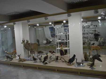eco museum obiective turistice ruse 3