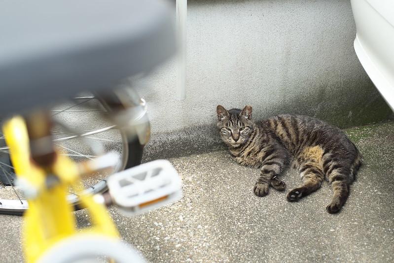 東京路地裏散歩 日暮里のネコ 2016年7月16日
