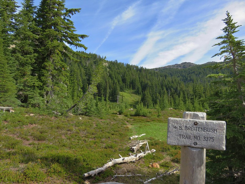 Junction with the South Breitenbush Trail