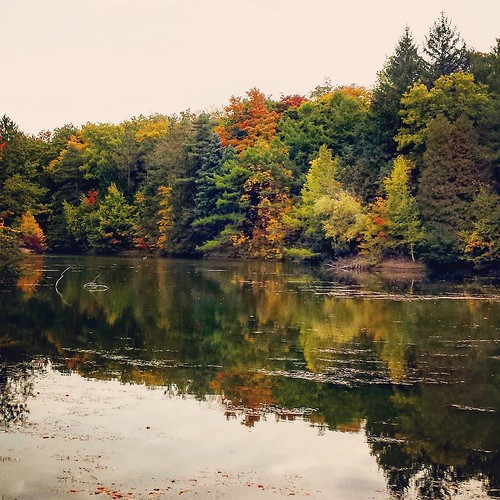 The pond at Chestnut Ridge, toward the end #ChestnutRidge #wny #OrchardPark #autumn