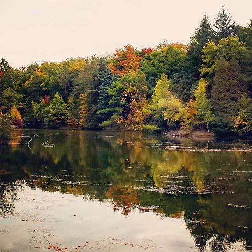 The pond at Chestnut Ridge, toward the end #ChestnutRidge #wny #OrchardPark #autumn