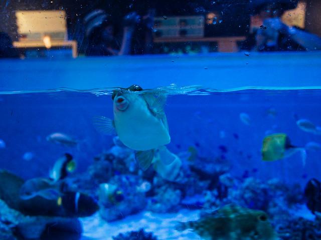 160810_takeshima_aquarium-15