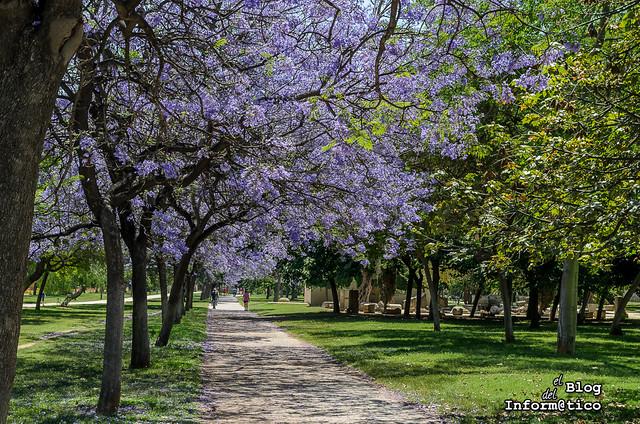 jardines del turia valencia primavera 02