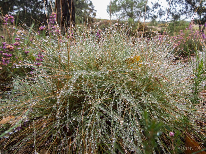 Bejewelled grass