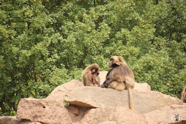Besuch Tierpark Friedrichsfelde 07.08.1679