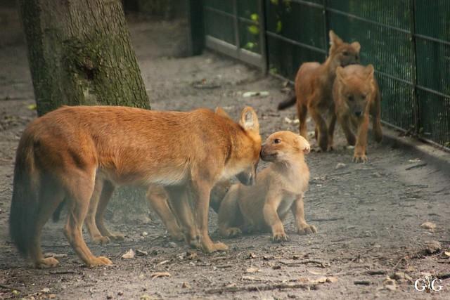 Besuch Tierpark Friedrichsfelde 07.08.1656