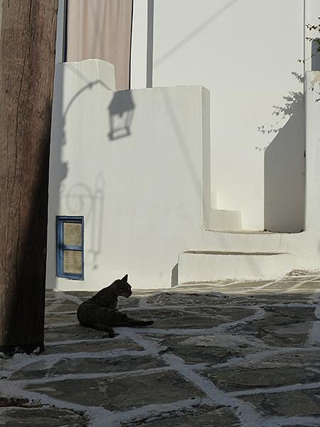 chat noir à Lefkes