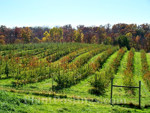 oakwood orchard