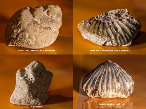 Fósiles y piedra