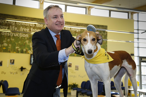 Free Dog Microchipping Liverpool