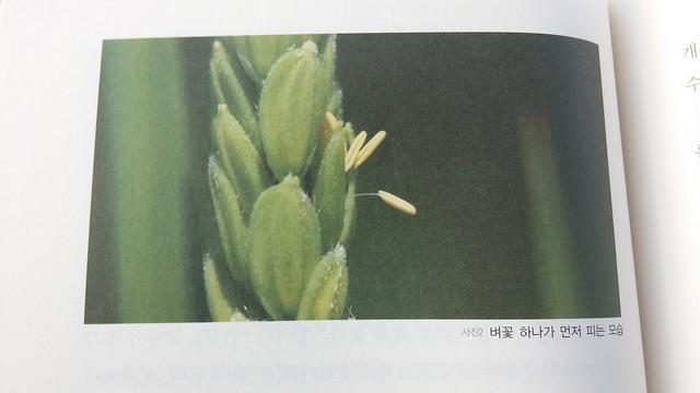 독서노트: 직파벼 자연재배