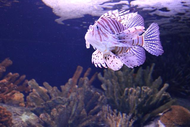 oceanario-lisboa28
