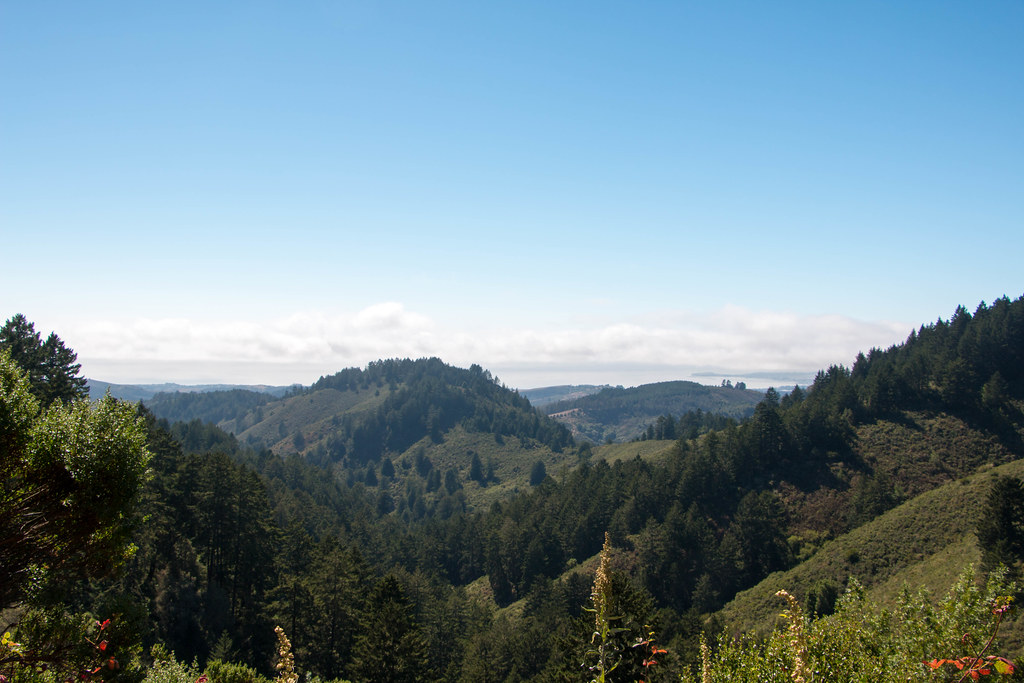 07.31. Purisima Creek Redwoods