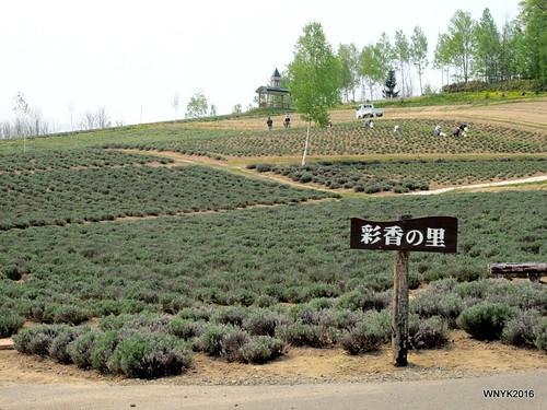Saika-no-Sato Flower Garden