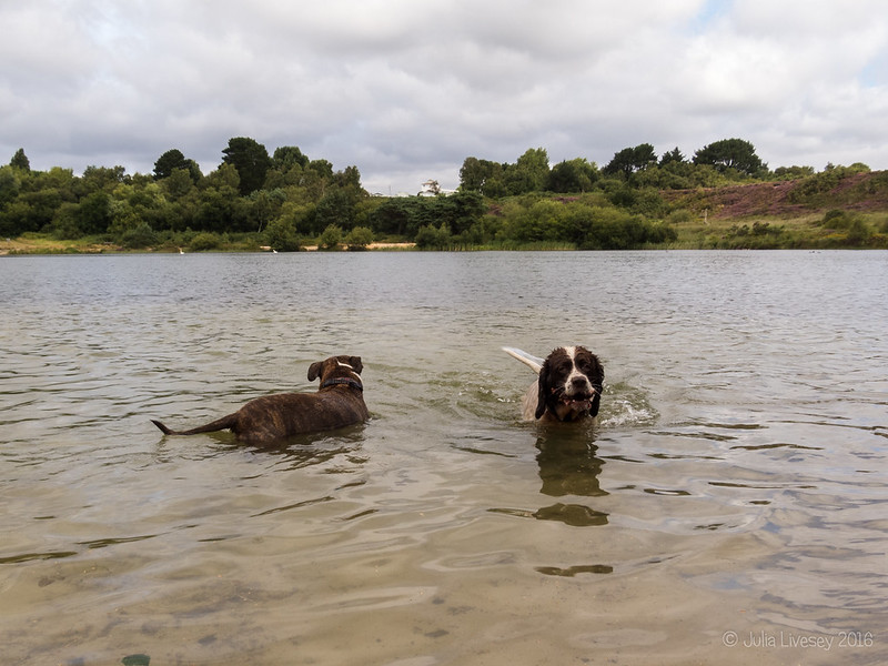 Jez and Max in the lake