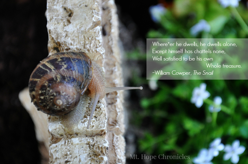 The Snail @ Mt. Hope Chronicles