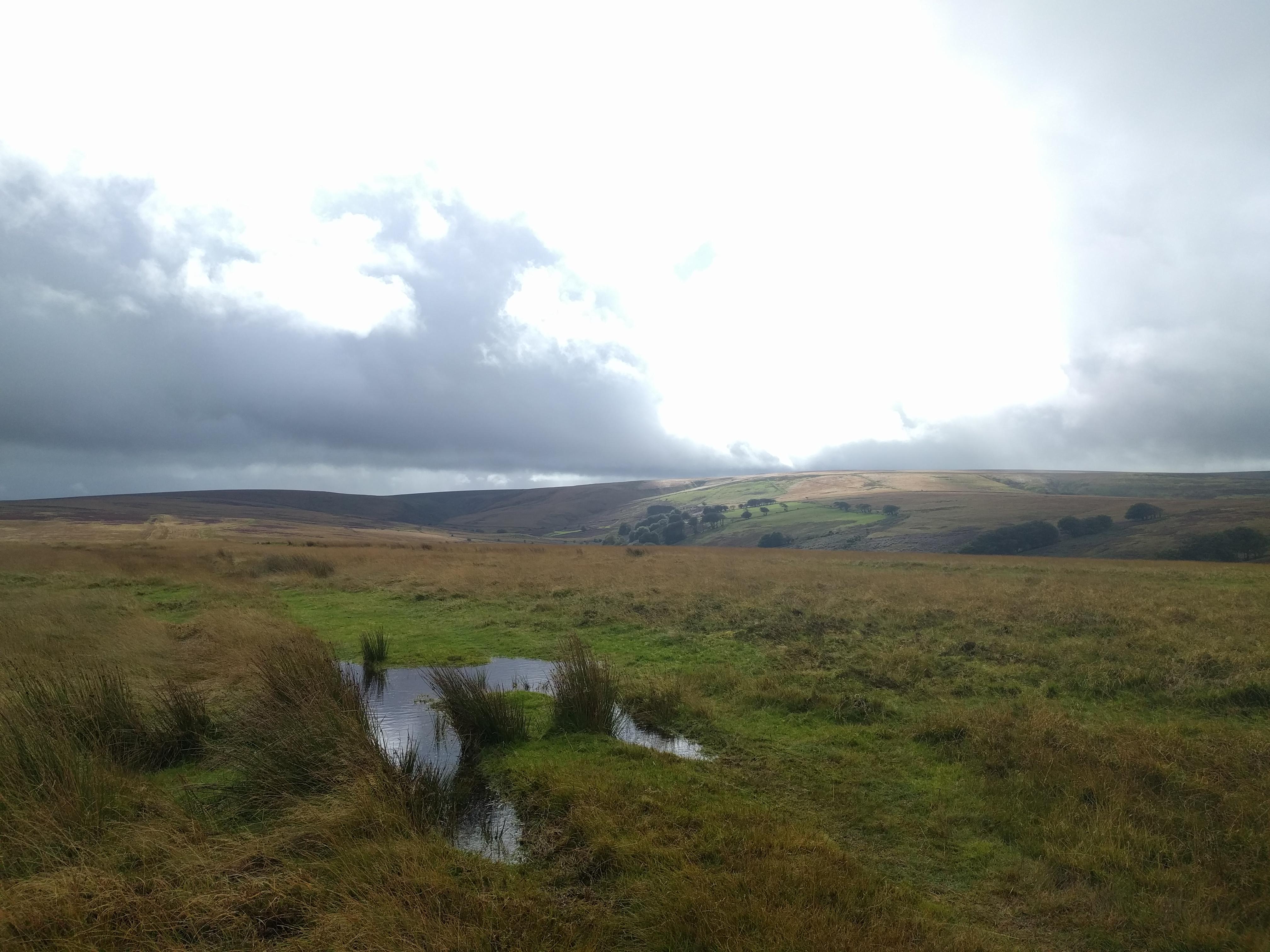On Cheriton Ridge #sh #twomoorsway #DevonC2C