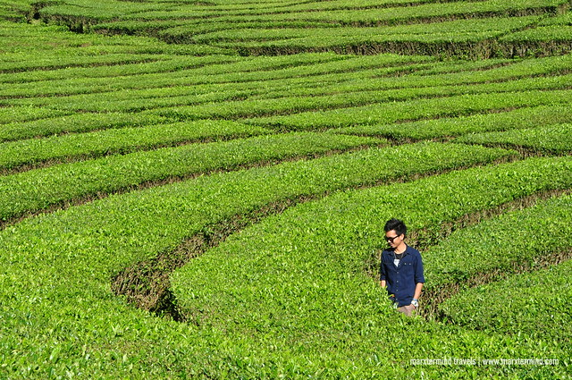 Taking Photos at Rancabali Tea Plantation Indonesia