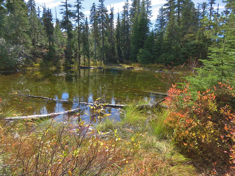 Pond/lakelet in the Tenas Lakes area